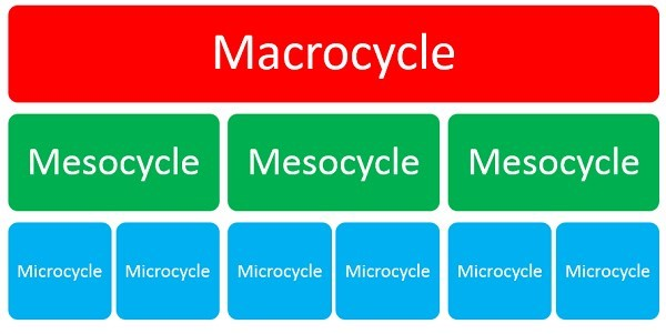periodisation cycles
